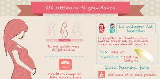 19 settimana di gravidanza