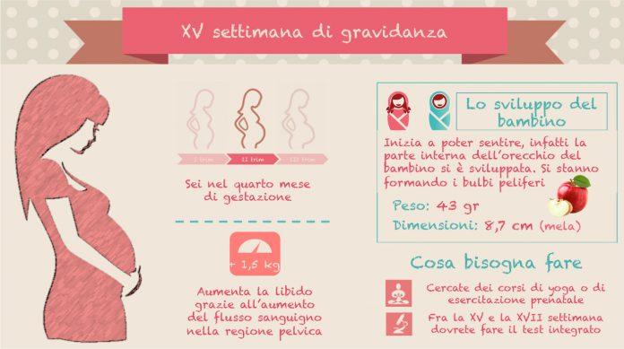15 settimana di gravidanza