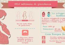 24 settimana di gravidanza ventiquattresima settimana